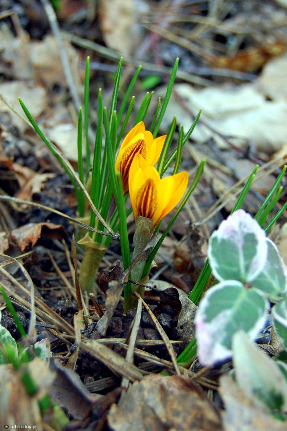 pierszy dzień wiosny