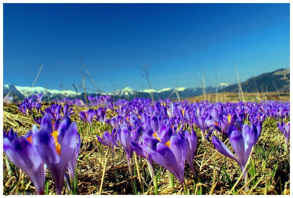 Wiosna na Podhalu