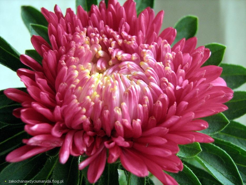 http://s3.flog.pl/media/foto/1666494_asterkwiat-jesieniniedlugo-jesien-nadejdzie-i-nikt--tego-nie-zmieni------.jpg