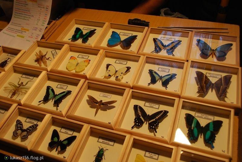 Znalezione obrazy dla zapytania owady wgablotce