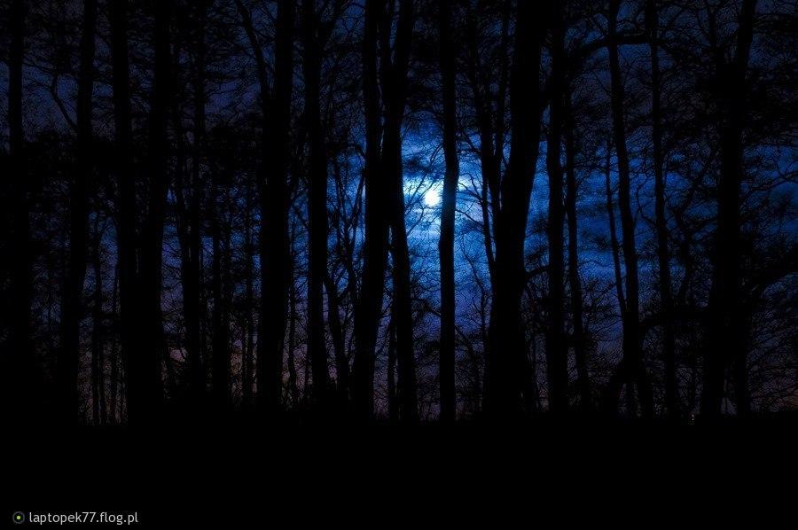 Znalezione obrazy dla zapytania Las nocą