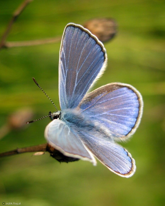 Niebieski szmaterloczek dla zawsze serdecznej ,przesympatycznej Elżbietki  :)   Oczywiście muzę trzeba odpalić ;)