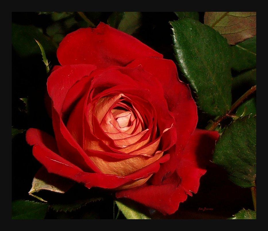 Miłość Szczęśliwa Wisława Szymborska Zdjęcie Fotoblog