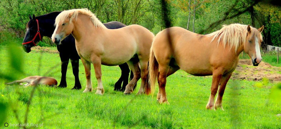 -,,Gdy zajrzymy w głąb wspaniałego, dzikiego serca konia, musimy żywić nadzieje, że znajdziemy tam nasze własne serce'