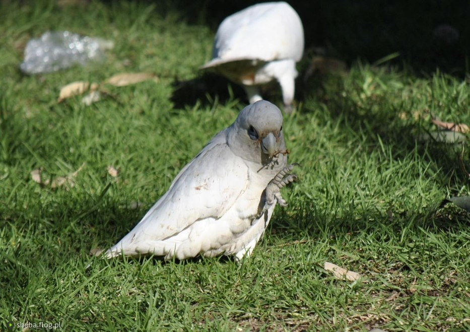 Ptaki tez korzystaja z konczyn