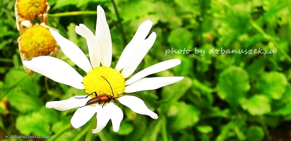 Taki mały robaczek dla mojego robaczka :)