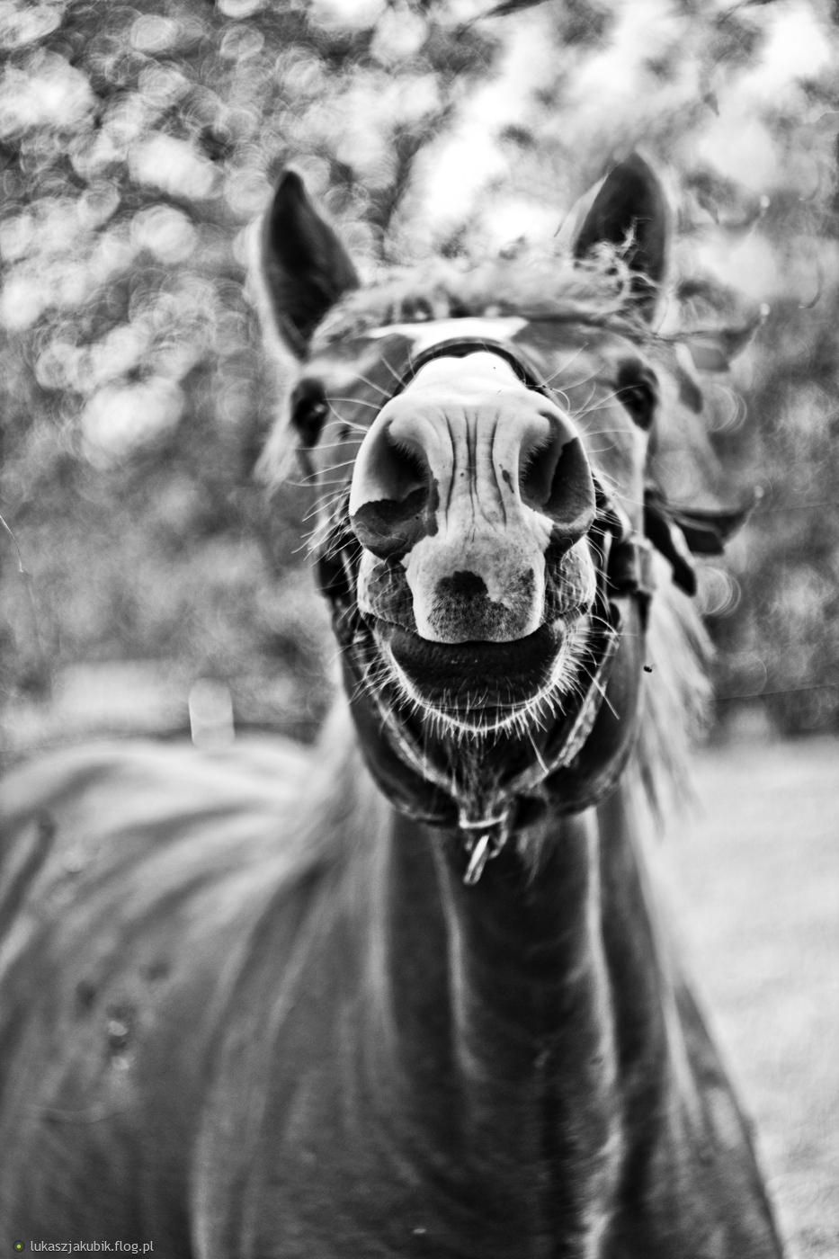 http://s3.flog.pl/media/foto/5475456_no-helol-wrocilem-na-przywitanie-macie-nochal-konia-i-jego-usmiech-xd.jpg