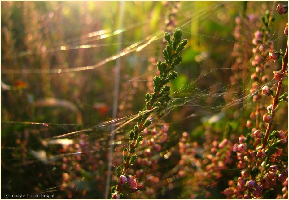 Leśny Zakątek Zapraszam Do Lektury Wiersza Zdjęcie