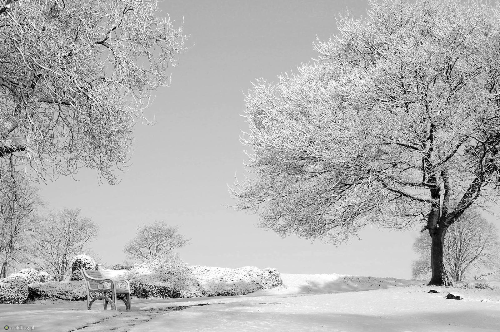 Zima Przeszła Przez Park 1 Fotoblog Arek Flog Pl
