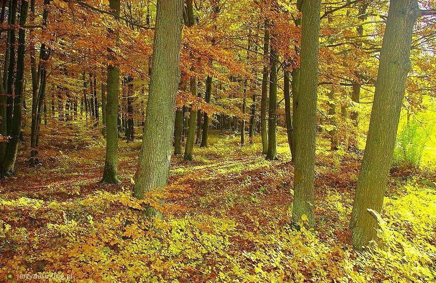 Znalezione obrazy dla zapytania jesień w lesie