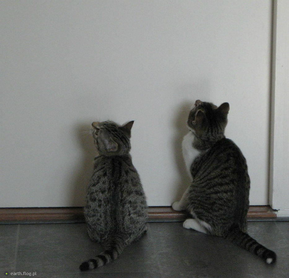 Bo Co Ma Począć Kot W Pustym Mieszkaniu Zdjęcie