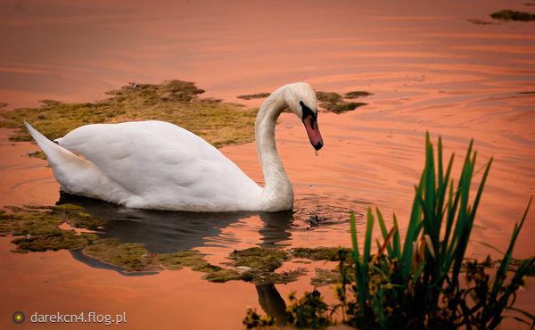 http://s3.flog.pl/media/foto_middle/5522396_podczas-zachodu.jpg