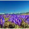 Wiosna na Podhalu ::