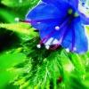 Moja wiosenna tęsknota ;) :: ...dla Ciebie Elżbietko :<br />)