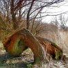 &quot;  Drzewo - dźiwo &q<br />uot; ::