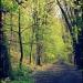 Puszcza Zgorzelecka :: Dziś przedstawiam zdjęcie<br /> z jednego z najnowszych <br />fotograficznych spacerów.<br /> Na fotografii widać